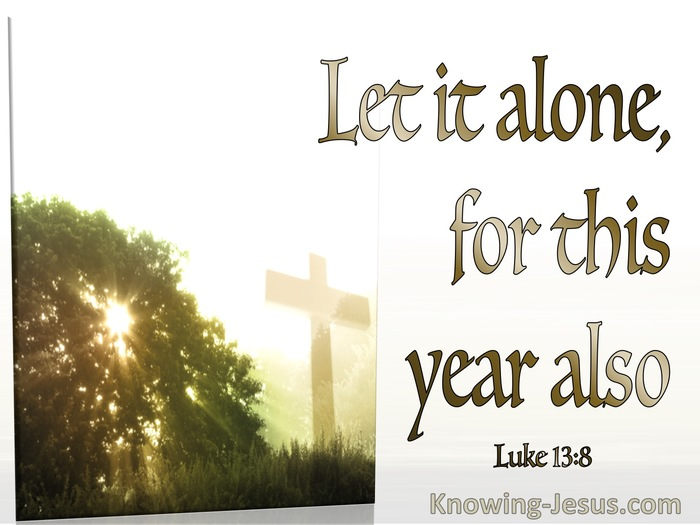 Luke 13-8 Let It Alone For This Year Also white